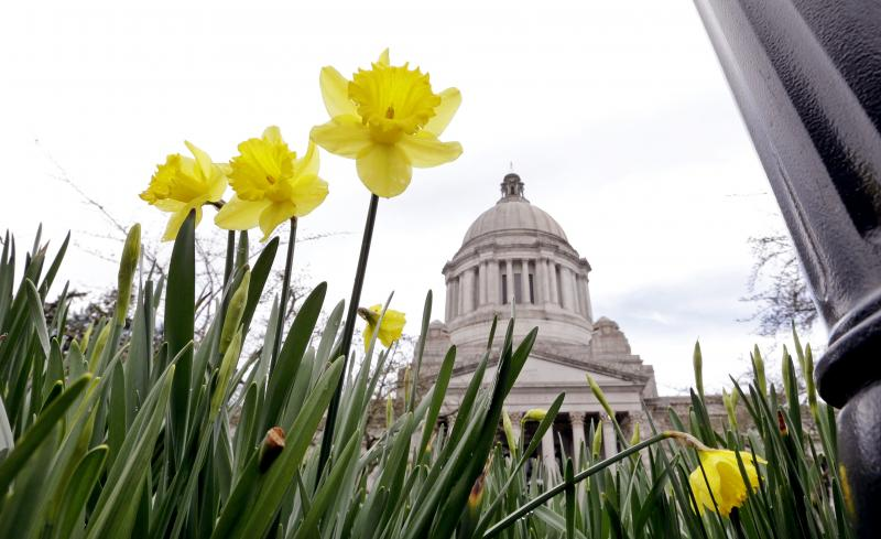 A few of the first daffodils of the season begin to bloom in view of the Capitol building Wednesday, March 5, 2014, in Olympia, Wash.