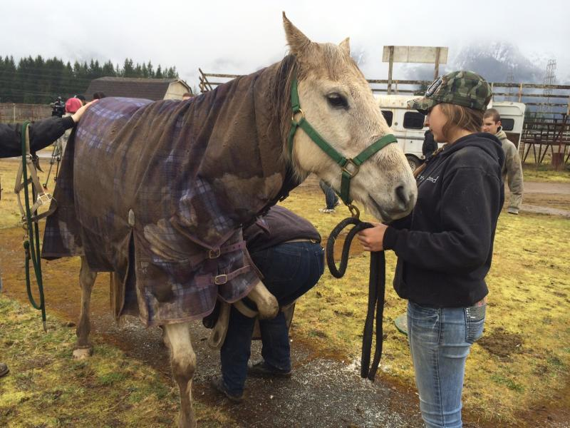 The March 22 mudslide narrowly missed the Andrews family's property in Oso, Wash., where this 14-year-old horse named Cassie was kept. After flood waters threatened the property, the Andrews family had to rush to remove Cassie from the property.