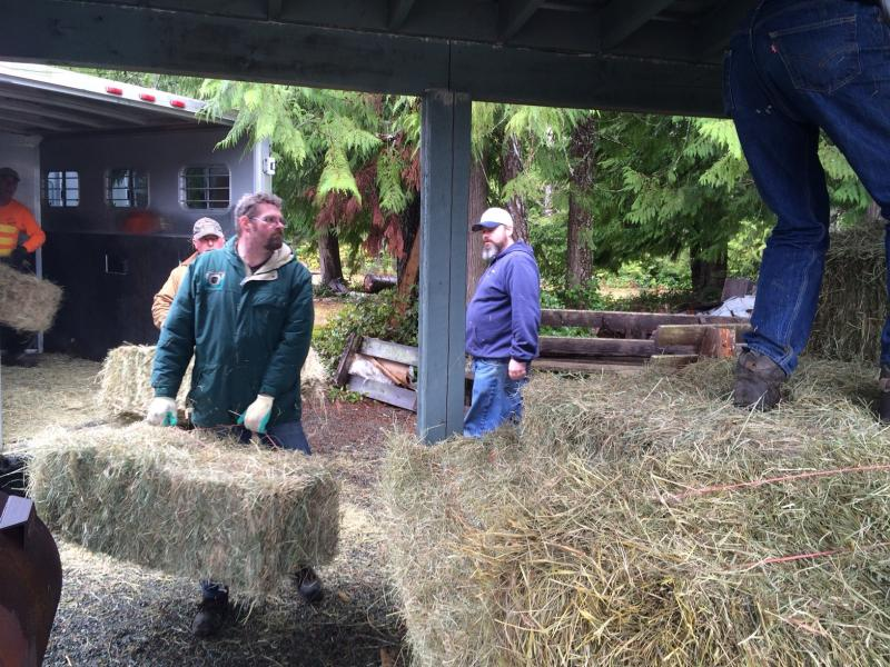 Volunteer Raymond Sanderson, left, heaves bales of hay out of a trailer and onto wooden pallets under a roof.