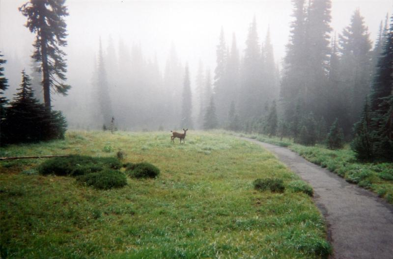 Visitors to Mount Rainier National Park aren't the only ones who enjoy the meadows at Paradise.