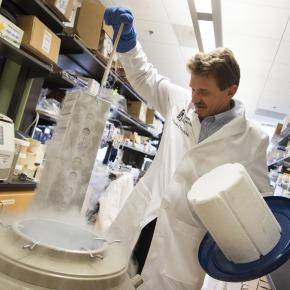 Dr. Charles Murry pulls cells out of a dry ice vat at his South Lake Union laboratory.