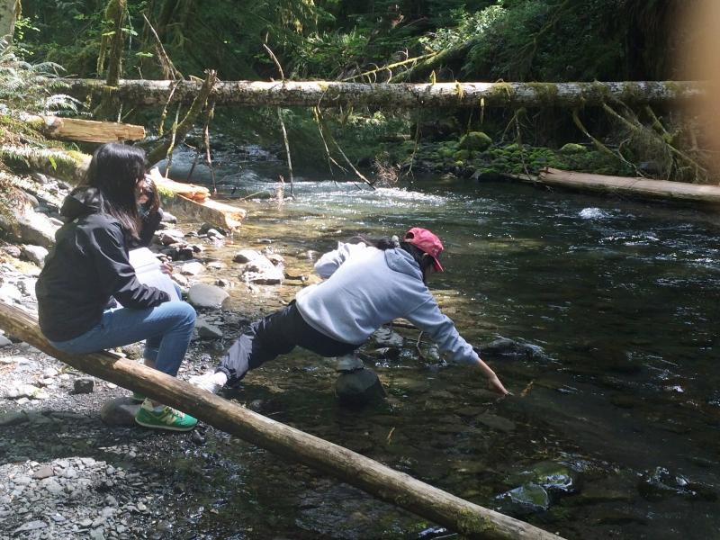 Rainier Beach High School biology students reach into Barnes Creek, a waterway 10 miles west of the Elwha River in Olympic National Park. They're spending the week in the park studying river ecology.