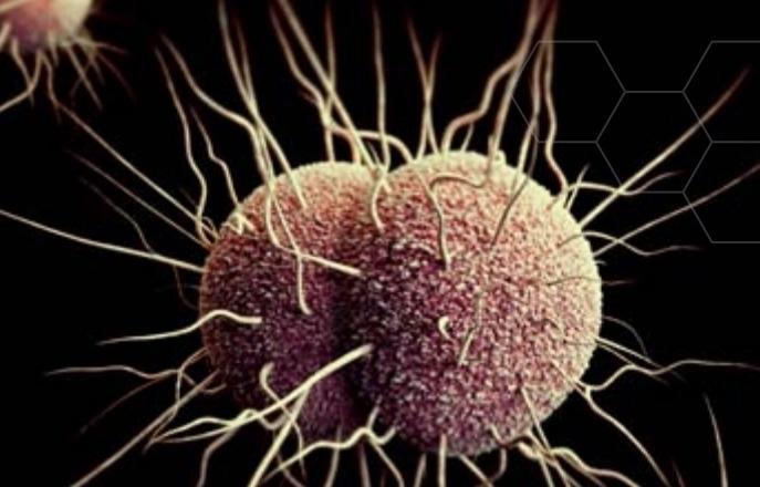 Gonorrhea bacterium