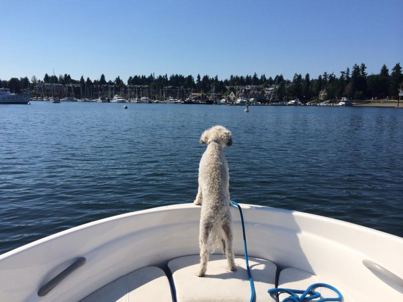 KPLU travel expert Matthew Brumley (and his dog, Sophie) says locals should take more advantage of the water as a way to get around the region. There are a lot of good getaways, if you're willing to get on a boat.
