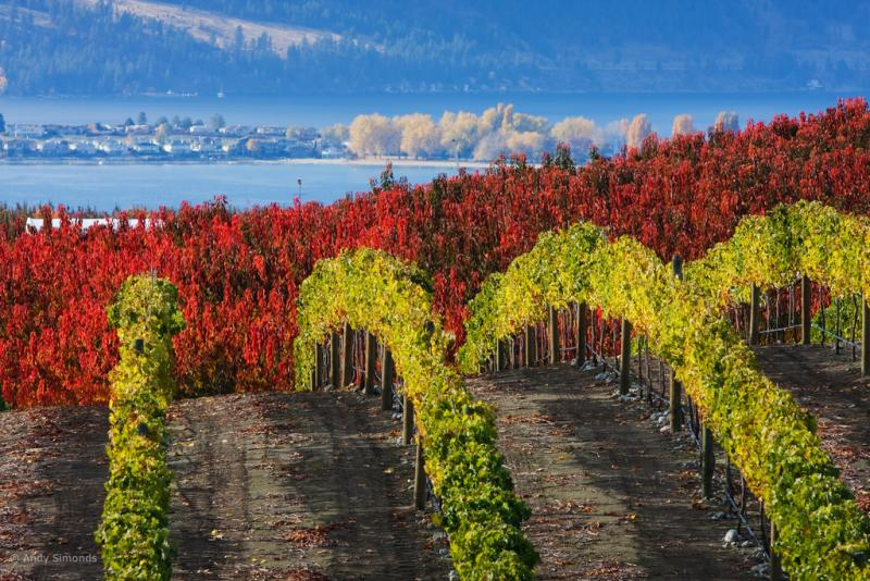 Washington's wine country -- like these vineyards near Lake Chelan -- can be great destinations for autumn travelers.
