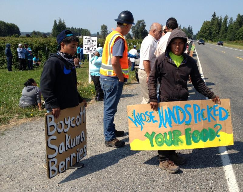 Sakuma Brothers Farms workers walked out to protest the firing of an employee.