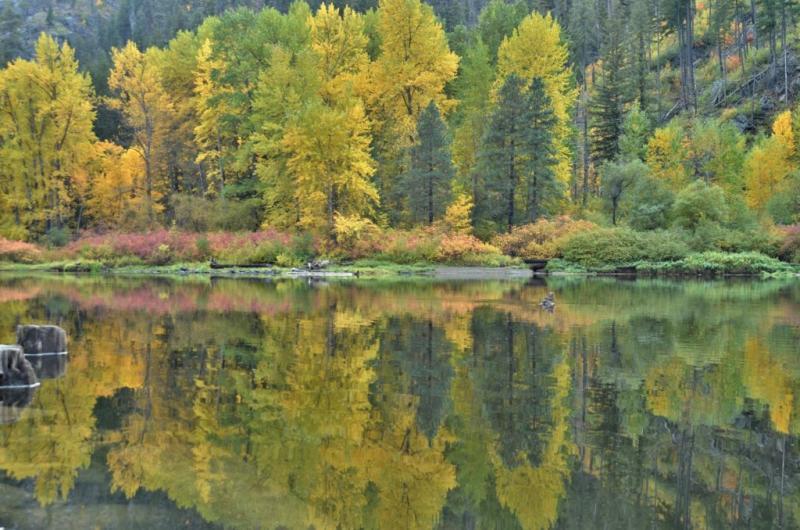 Autumn, along the Wenatchee River.