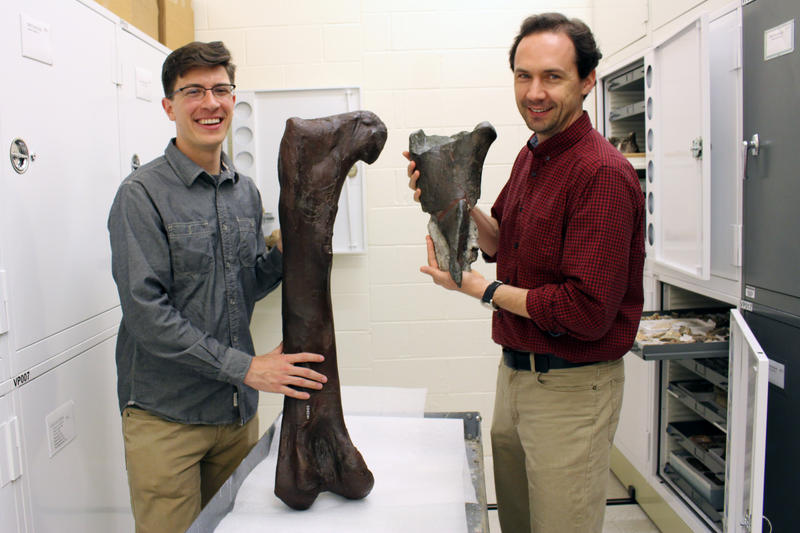 Dr. Christian Sidor, Burke Museum curator of vertebrate paleontology, and Brandon Peecook, University of Washington graduate student, compare the fossil fragment to the cast of a Daspletosaurus femur.