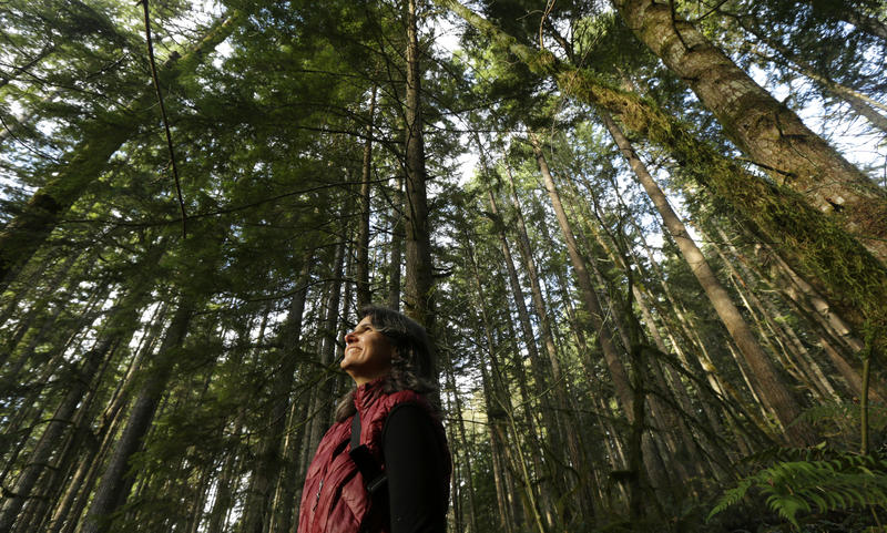 Paula Swedeen, a forest policy specialist for the Washington Environmental Council, poses for a photo Monday, Nov. 23, 2015, near Ashford, Wash.