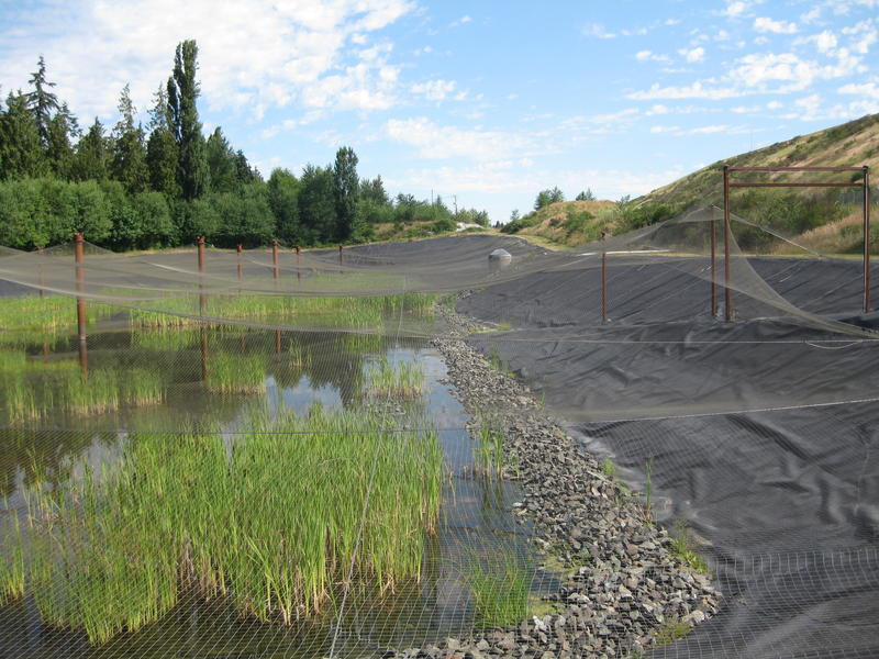 The retention ponds downhill from SeaTac's 3rd Runway filter runoff before it is released into local waterways such as Miller Creek and ultimately, Puget Sound.