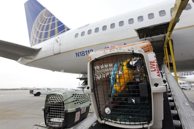 A parrott is loaded onto Continental Airlines plane at George Bush Intercontinental Airport Friday, April 16, 2010 in Houston. Continental is part of the global Star Alliance network.