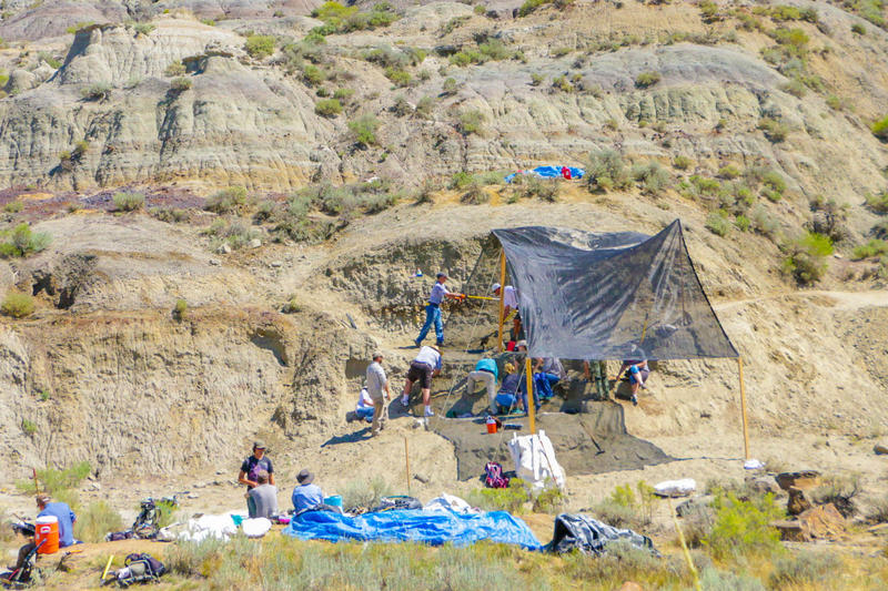 The excavation site in northern Montana where Burke Museum paleontologists discovered a T. rex skull and other bones.  Credit: Photo by Larry Mose. Courtesy Burke Museum.