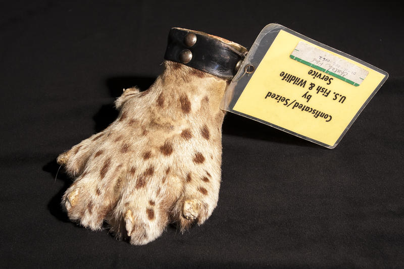 A cheeta paw paperweight.