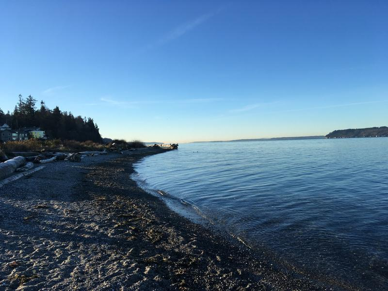 The beach at Mukiteo State Park is one of just a few places around Puget Sound where marbled murrelets have been regularly sited in surveys done by Seattle Audubon.