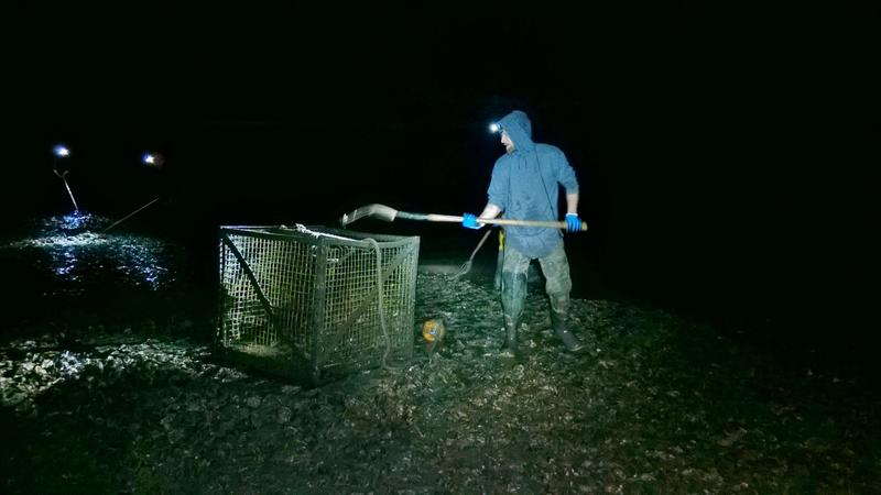 A Taylor Shellfish crewman harvests oysters on a winter night.