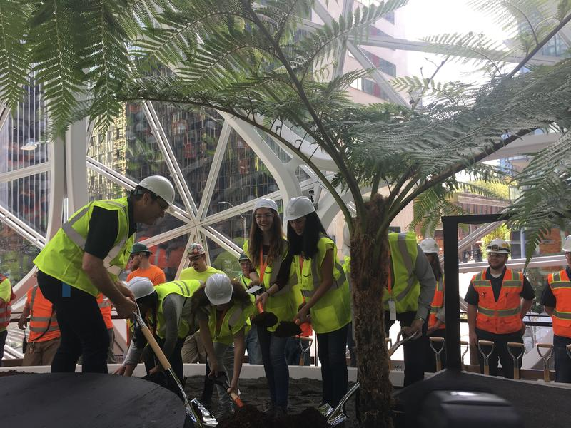 A group from the Environmental and Adventure School in Kirkland help plant the first tree in the spheres at Amazon's Seattle headquarters.