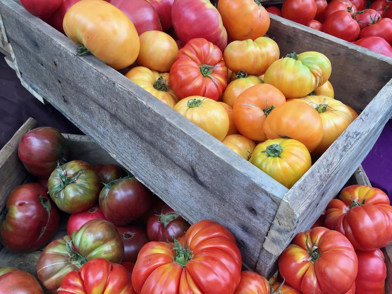 Assorted tomatoes at Eugene's Lane County Farmers Market