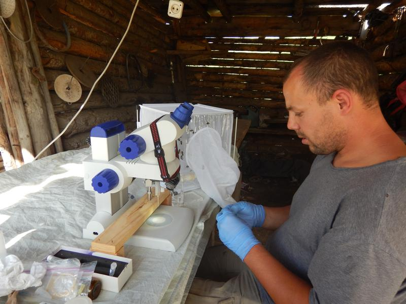 Brandon Hopkins, who runs the germ plasim bank, a sperm bank for honeybees at Washington State University, collecting semen in Kazakhstan.