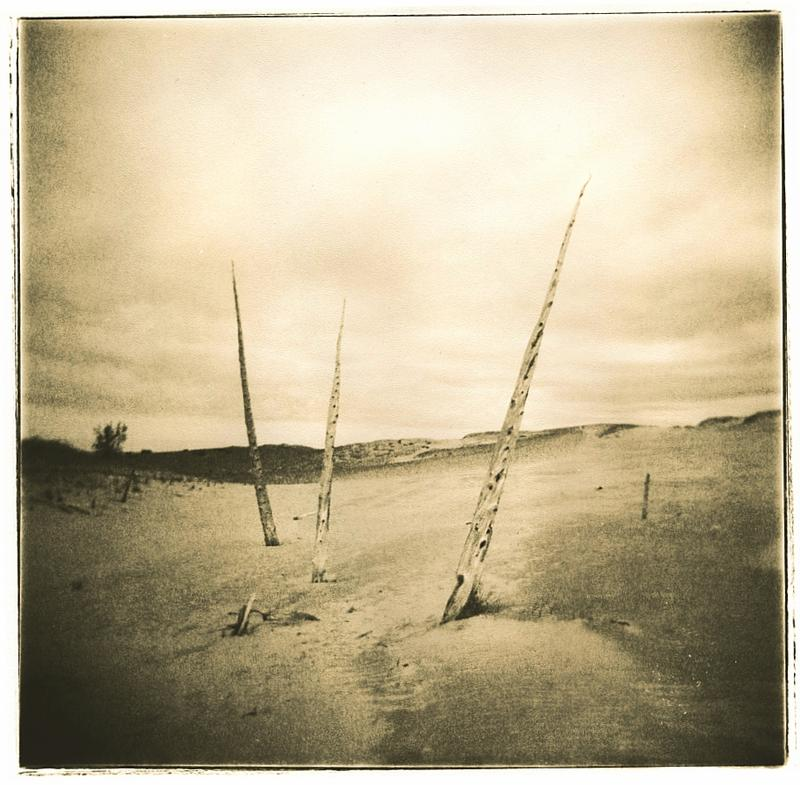 Lith Print: Ghost Forest