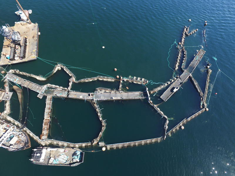 An aerial image of Cooke Aquaculture's collapsed net pen operations at Cyprus Island on August 28, 2017.