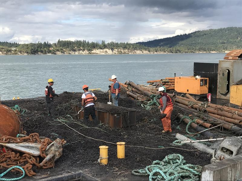 "State inspectors  on September 19, 2017, surrounded by mussels and other marine debris known as ""biofouling"" that accumulated on nets at Cooke Aquaculture's Cypress Island facility, increasing drag that contributed to the August collapse."