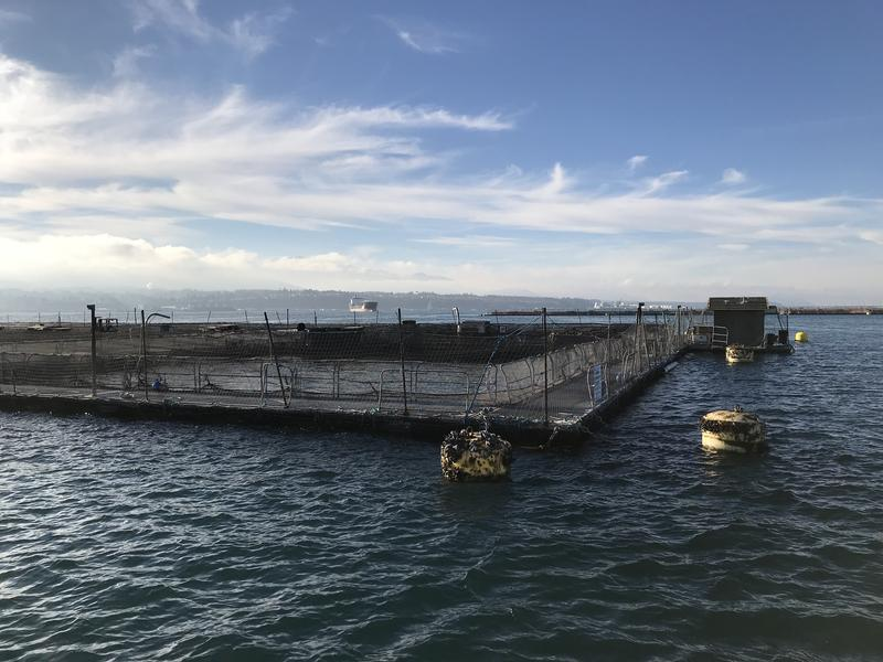 The state terminated the lease last month for Cook Aquaculture's facility in Port Angeles. The company is now appealing.