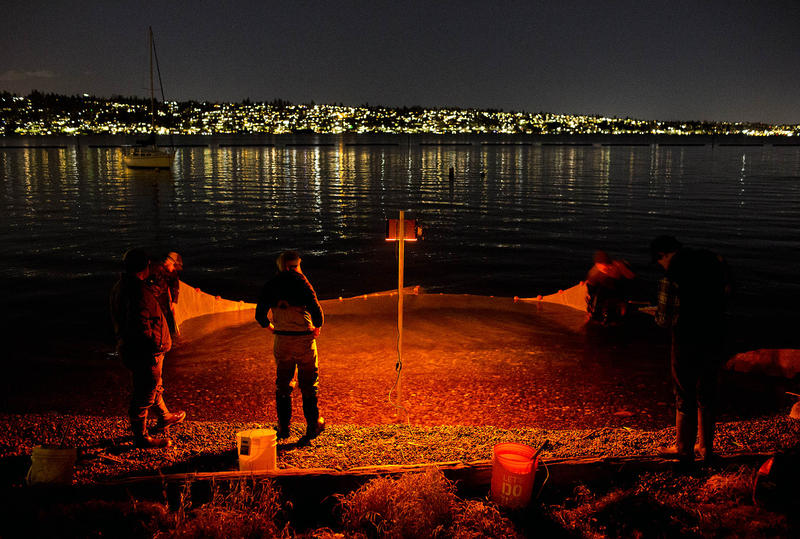 Researchers at Gene Coulon Park in Renton, Wash.