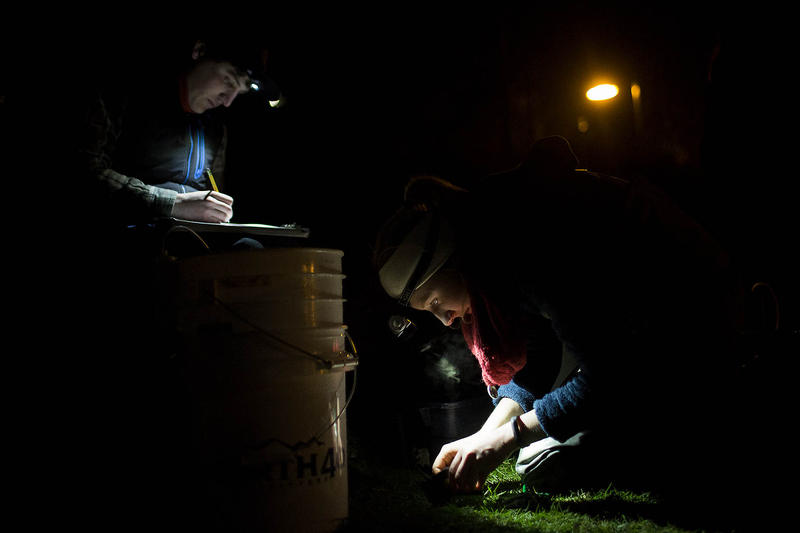Nathan Battey and Olivia Williams, AmeriCorps members, count and measure the fish caught at Gene Coulon Park Thursday night.