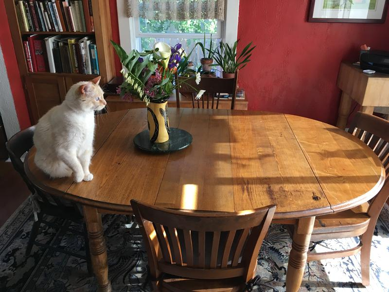 The L&T's Greatest score -- Dining table and cat launcher.