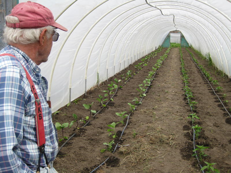 Nash Huber in one of his greenhouses in Sequim. He is known for cross-breeding food crops such as kale, spinach, brussel sprouts and cauliflower.