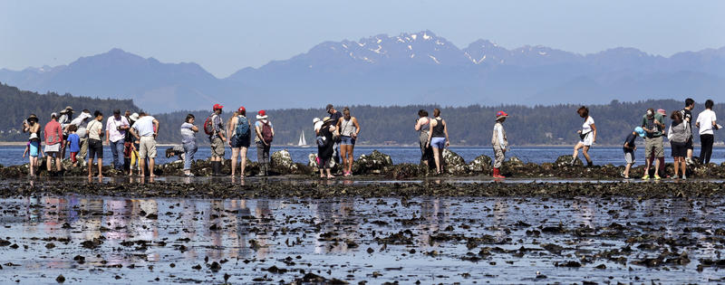 Beachgoers crowd together atop a rocky outcropping during an especially low tide in the Salish Sea, July 12, 2018, in Seattle. Sea stars, sea cucumbers, anemones, crabs, tube worms and clams were among the most common life sighted during the tidal event.