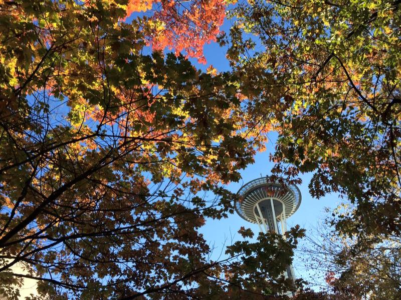 The Space Needle, as seen through some changing leaves.