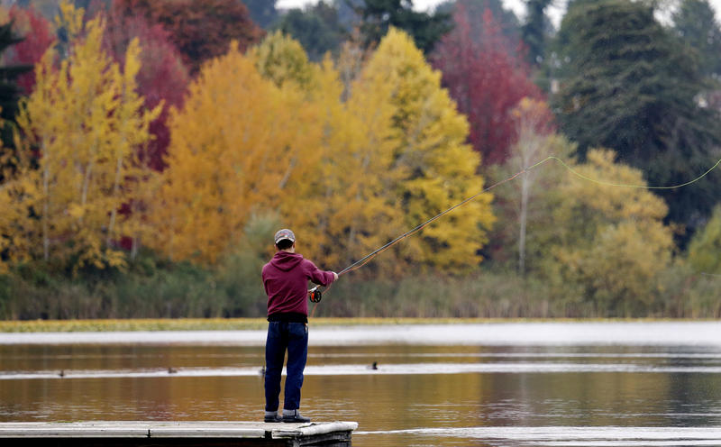 A man practices casting off a dock at Seattle's Green Lake park and in view of trees turning brilliant autumnal shades behind, Wednesday, Oct. 25, 2017.