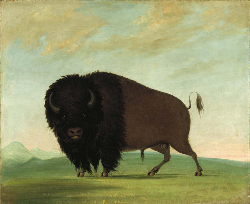 """George Catlin's oil-on-canvas """"Buffalo Bull, Grazing on the Prairie,"""" dates from 1832-1833."""