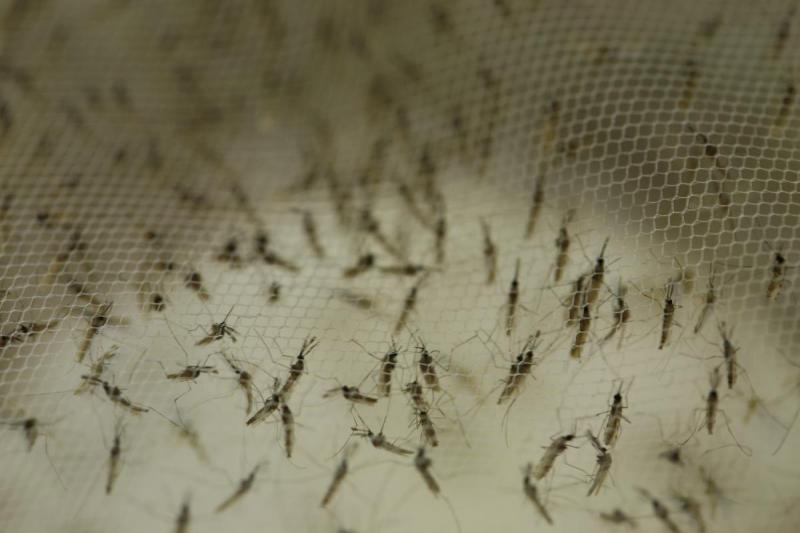 Now in its 36th year, Seattle BioMed grows its own mosquitoes, investigates malaria in mouse models, runs a series of research labs, and recruits volunteers for human trials.
