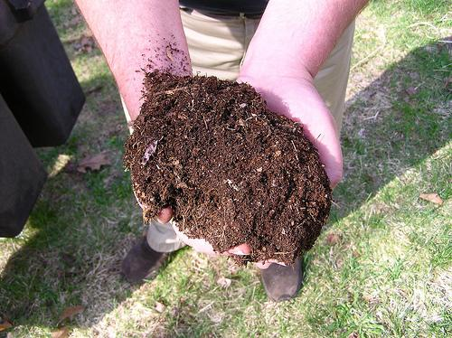 A good example of wonderful compost!