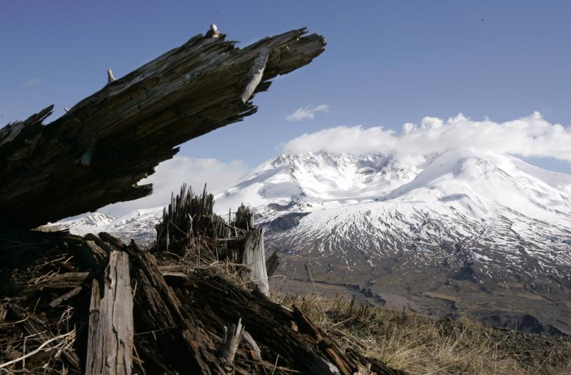 Mount St. Helens is seen April 19, 2005, behind a tree that was blown down in the 1980 eruption, at the Johnston Ridge Observatory in the Mount St. Helens National Monument, Wash.