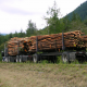 logging and habitat restoration