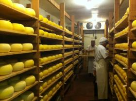 Cheese room at Bellweather Farms, Petaluma.