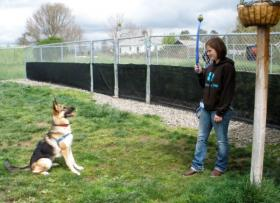 At the Sonoma Humane Society Bergin University students work with dogs to make them more adoptable. Here, Laura (right) and Barley are ready to play.