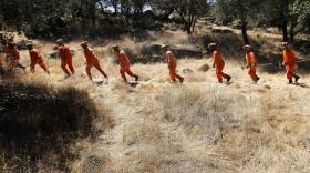 Right now there are about 4100 state inmates spread throughout 42 camps. They're a critical part of fire prevention and control, digging fire breaks and clearing brush.