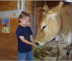 Raymond the bull enjoys a hand-fed snack from a young visitor to Forget-Me-Not Farm