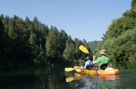 Some of the most interesting wildlife viewing in the county takes place on the Russian River, so while paddling between parks, you might see ospreys, bald eagles, kingfishers, great blue herons, turtles, otters and other birds and animals.