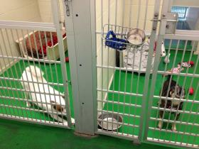 Dogs awaiting adoption at the Rohnert Park animal shelter.