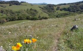 Taylor Mountain Regional Park and Open Space Preserve.