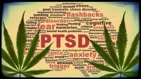 Medical Marijuana Study Gets Federal Green Light
