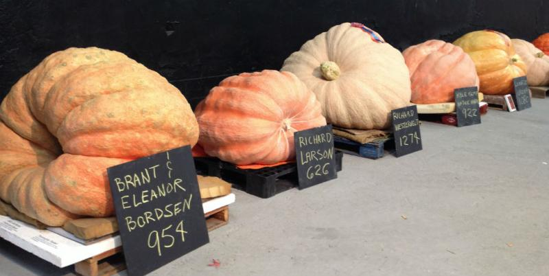 It wasn't hard to determine which giant pumpkin was the biggest. But the prettiest? That's open to discussion.