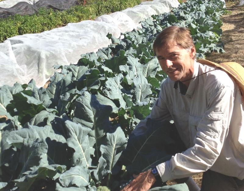 Garden manager Martin Cibulka checks a row of kale, a recnet addition to the Harvest for the Hungry Garden.