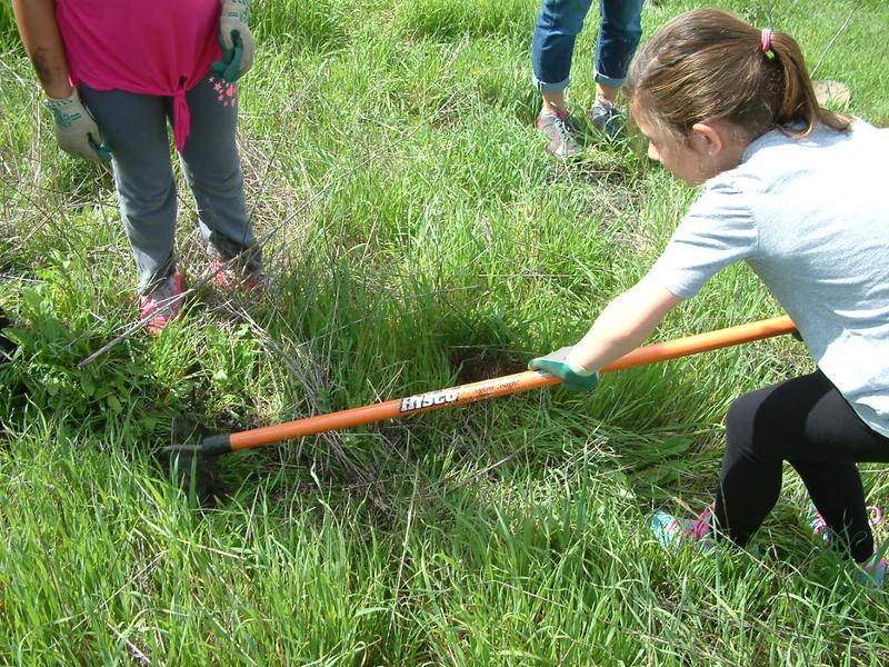 A 2nd grader from Loma Vista Elementary prepares land to plant an oak seedling