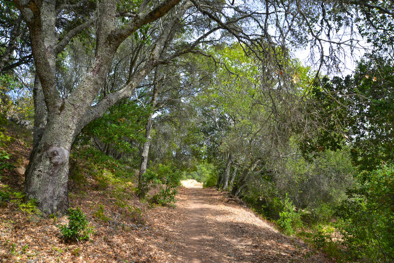 Existing trails, such as this, already connect portions of the Development Center property to the adjacent Jack London State Park.